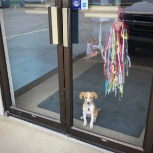 Loki The Twisted Purl's Shop Dog